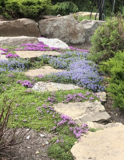 pixie gardens flowerbed services purple tiny flowers natural flowerbeds gardening service gardening company maintenance hire gardener gardeners to plant weed and maintain flowerbeds and yards.
